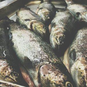 fishing_kontinent_4